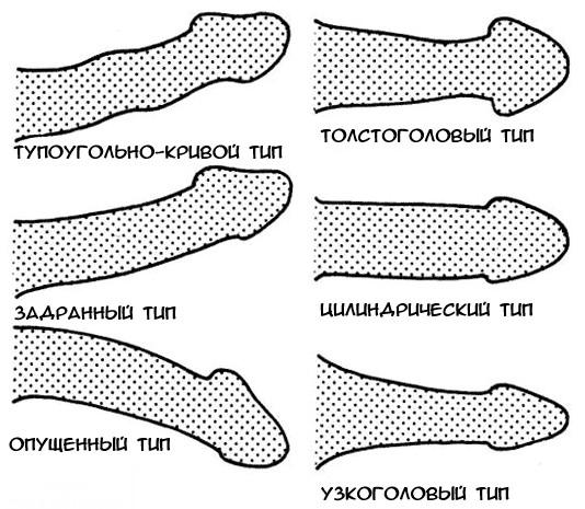 pénisz hosszának normái erekciós akupunktúrás pontok