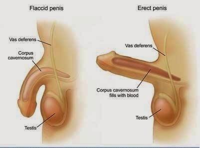az erekció növelésének módszerei öreg nagyapa péniszét