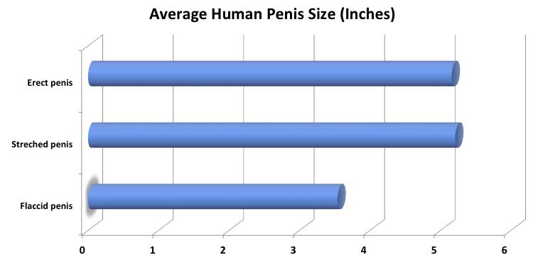 mi a normális és kicsi pénisz
