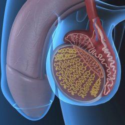 Krónikus prosztatagyulladás és erekció kezelése