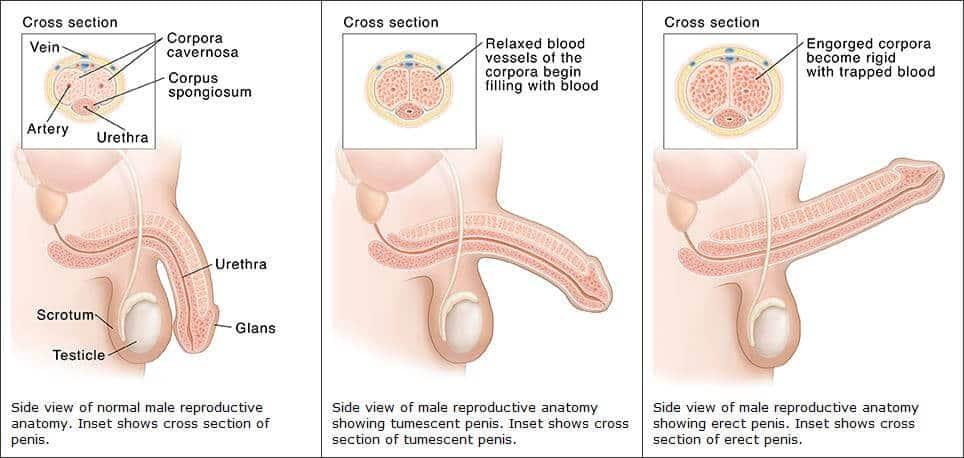 az erekció eltűnik, amikor levetkőzöl egy lányt ha vizet önt a péniszbe