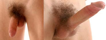 a pénisz megnagyobbodása, fokozott erekció