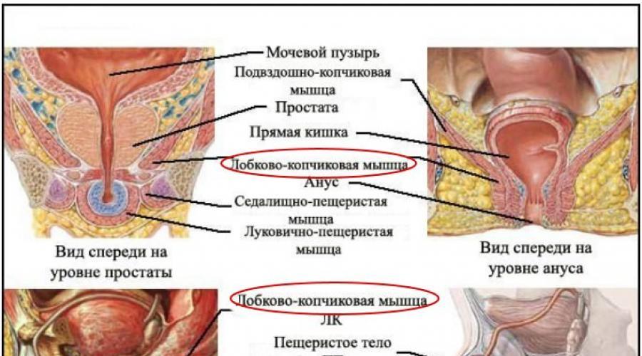 kegel gyakorlat erekció erősítése
