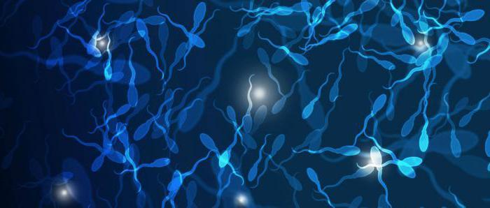 spermiumszám az erekció során