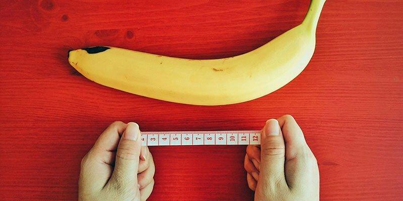 a pénisz hossza csökken